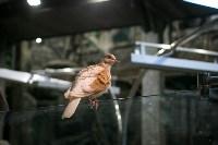 Тульский экзотариум: животные, Фото: 2