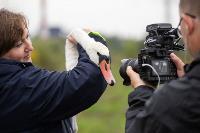 В Туле спасли лебедя с одним крылом, Фото: 31