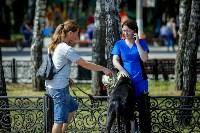 В Центральном парке Тулы проходит фестиваль помощи животным, Фото: 4