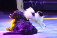 Цирковое шоу, Фото: 49