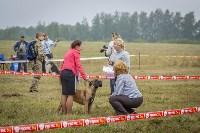 Международная выставка собак, Барсучок. 5.09.2015, Фото: 40