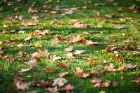 Золотая осень в Тульской области, Фото: 53