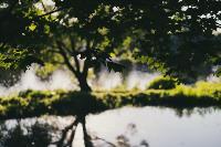 Летний день в богородицком парке, Фото: 38