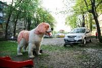 Огромные фигуры кота и собаки, Фото: 7