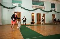 Выставка собак в Туле, 29.11.2015, Фото: 48