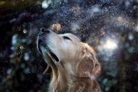 Самая счастливая собака в мире!, Фото: 7