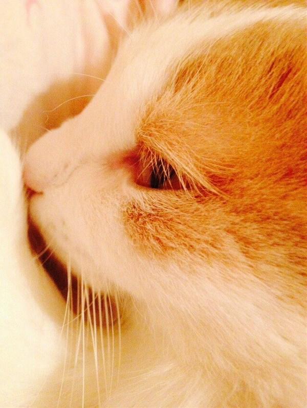 Милейший кот Мартин