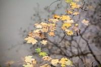 Платоновский парк, Фото: 24