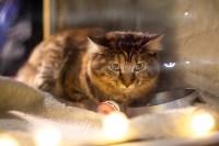 Пряничные кошки, Фото: 32