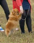 Международная выставка собак, Барсучок. 5.09.2015, Фото: 10