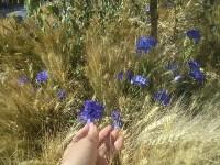 Цветочный джем: Тульское поле в Москве, Фото: 13
