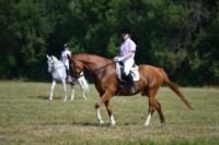 В Ясной поляне стартовал турнир по конному спорту, Фото: 6