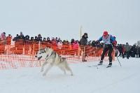 Праздник северных собак на Куликовом поле , Фото: 73