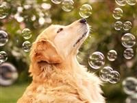 Самая счастливая собака в мире!, Фото: 6