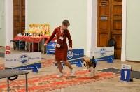 """Выставки собак в ДК """"Косогорец"""", Фото: 33"""