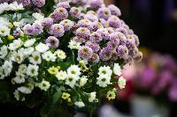Цветы , Фото: 10