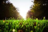 Центральный парк, утро, осень, Фото: 52
