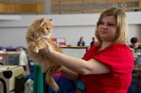 Выставка кошек в ГКЗ. 26 марта 2016 года, Фото: 40