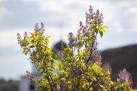 Тишина, солнце и бесконечный простор: 90 красивых фото с родины слонов – Одоевского района, Фото: 58