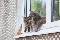 Тульские котики, Фото: 47