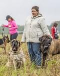 Международная выставка собак, Барсучок. 5.09.2015, Фото: 27