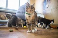 Волонтеры спасли кошек из адской квартиры, Фото: 37