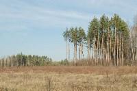 посадка леса в Одоевском лесничестве, Фото: 3