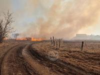 В Федоровке огонь с горящего поля едва не перекинулся на дома, Фото: 12