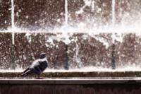 Жара в Туле, Фото: 8