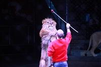 Новая программа в Тульском цирке «Нильские львы». 12 марта 2014, Фото: 20