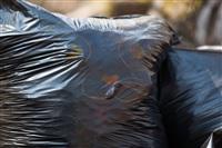 """""""Слобода"""" и Myslo очистили от мусора Платоновский парк!, Фото: 142"""