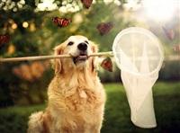 Самая счастливая собака в мире!, Фото: 1