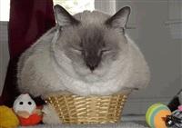 Жидкие коты, Фото: 12