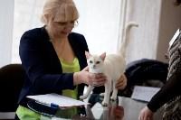 Выставка кошек. 4 и 5 апреля 2015 года в ГКЗ., Фото: 8