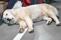 Выставка собак в Туле 26.01, Фото: 31