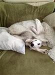 Забавные собаки, Фото: 8