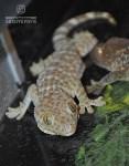 Ящерицы в Тульском экзотариуме, Фото: 4