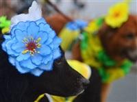 Собачий карнавал, Фото: 4