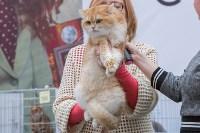 Выставка кошек в Туле, Фото: 39