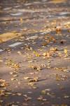 Золотая осень в Туле-2019, Фото: 116