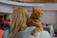 Выставка кошек в ГКЗ. 26 марта 2016 года, Фото: 38