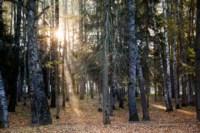Центральный парк, утро, осень, Фото: 21