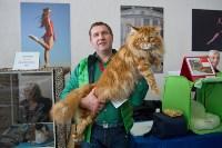 Выставка кошек в ГКЗ. 26 марта 2016 года, Фото: 99