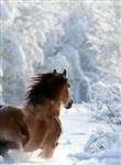 Русская зима, Фото: 4