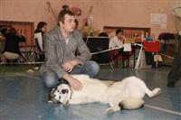 В Туле прошла всероссийская выставка собак, Фото: 12