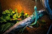 Тульский экзотариум: животные, Фото: 40