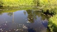 В реке Воронке отравили рыбу?, Фото: 3