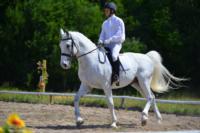 В Ясной поляне стартовал турнир по конному спорту, Фото: 125