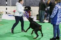 Выставка собак в Туле 14.04.19, Фото: 46
