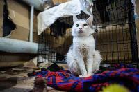 Волонтеры спасли кошек из адской квартиры, Фото: 22